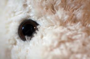 Kuscheltier Bär Knuffel von Kallisto weiß